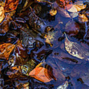 Leaves In A Puddle Poster
