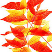 Leaves In Fall Poster