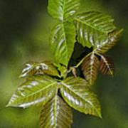 Leaves Of Three Poster