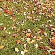 Leaves On Grass Poster