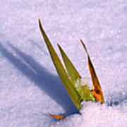 Leaves Through Snow Poster