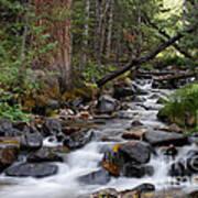 Lehman Creek In Great Basin National Park Poster