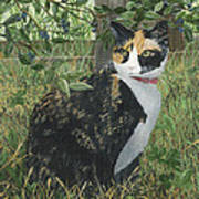 Leia Cat In Blueberries Poster