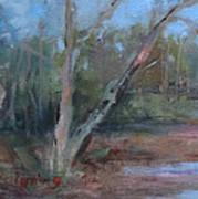 Leiper's Creek Study Poster by Carol Berning