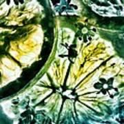 Lemon And Elderflower  Poster