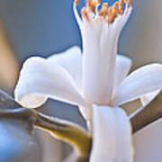 Lemon Blossom Poster