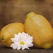 Lemon Fresh Still Life Poster