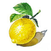 Artz Vitamins The Lemon Poster