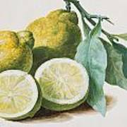 Lemons Poster by Pierre Joseph Redoute