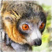 Lemur 004 Poster