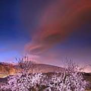 Lenticular Clouds Over Almond Trees Poster