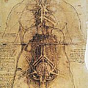 Leonardo: Anatomy, C1510 Poster