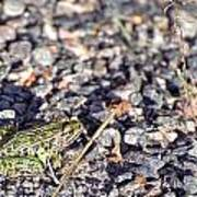 Leopard Frog And Gravel Poster