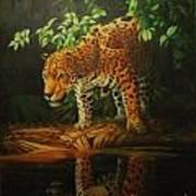 Leopard On Pond Poster