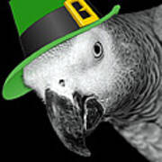 Leprechaun Parrot Poster