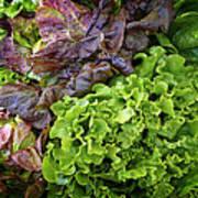 Lettuce Medley Poster