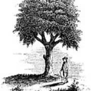Liberty Tree, 1765 Poster