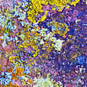 Lichen Abstract Poster