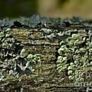 Lichen Macro I Poster