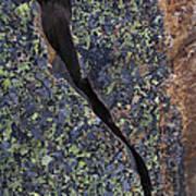 Lichen On Granite Poster by Heiko Koehrer-Wagner
