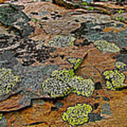 Lichens Along Trail To Plain Of Six Glaciers In Banff National Park-alberta-canada Poster