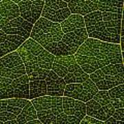 Life Grid In A Leaf Poster