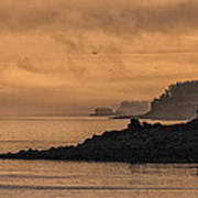 Lifting Fog At Sunrise On Campobello Coastline Poster