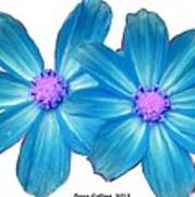 Light Blue Asters Poster