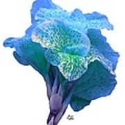 Light Blue Iris Poster