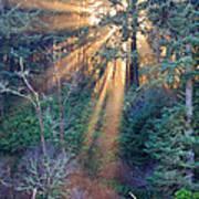 Light Shine Poster