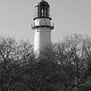 Lighthouse In Trees Poster
