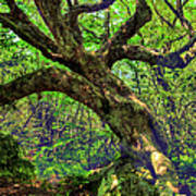 Likin Lichen - Blue Ridge Mountains Poster