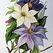 Lilac Clematis Poster