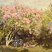 Lilac In The Sun, 1873 Poster