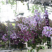 Lilacs Hanging Basket Window Reflection - Dreamy Lilacs Floral Art Poster