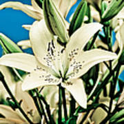 Lilies In White Poster