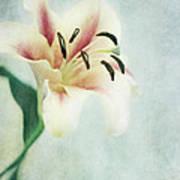 Lilium Poster