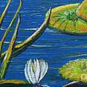 Lilly Pads Poster