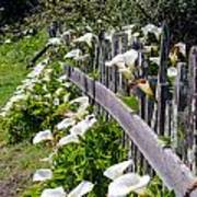 Lily Fence Poster