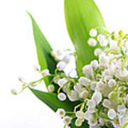 Lily Of The Valley Art Poster by Boon Mee