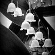 Lily Of The Valley Black And White Poster