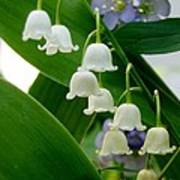 Lily Of The Valley Green Poster
