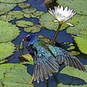 Lily Pad With Bird Poster