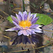 Lily Pad With Purple Flower Poster
