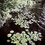 Lily Pads On Dark Water Poster