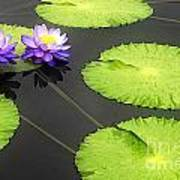 Lily Pads Purple Poster
