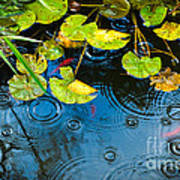 Lily Pads Ripples And Gold Fish Poster