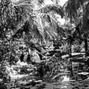 Lily Pond Bw Poster