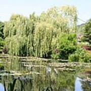Lily Pond In Monets Garden Poster