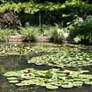 Lily Pond View Monets Garden Poster